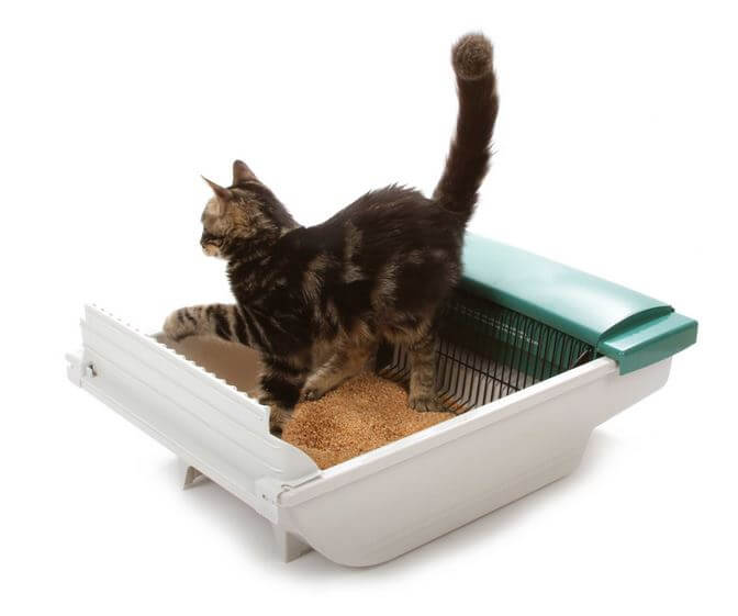 compared to other litter boxes on the market this is probably one of the quietest models it also represents great value for money