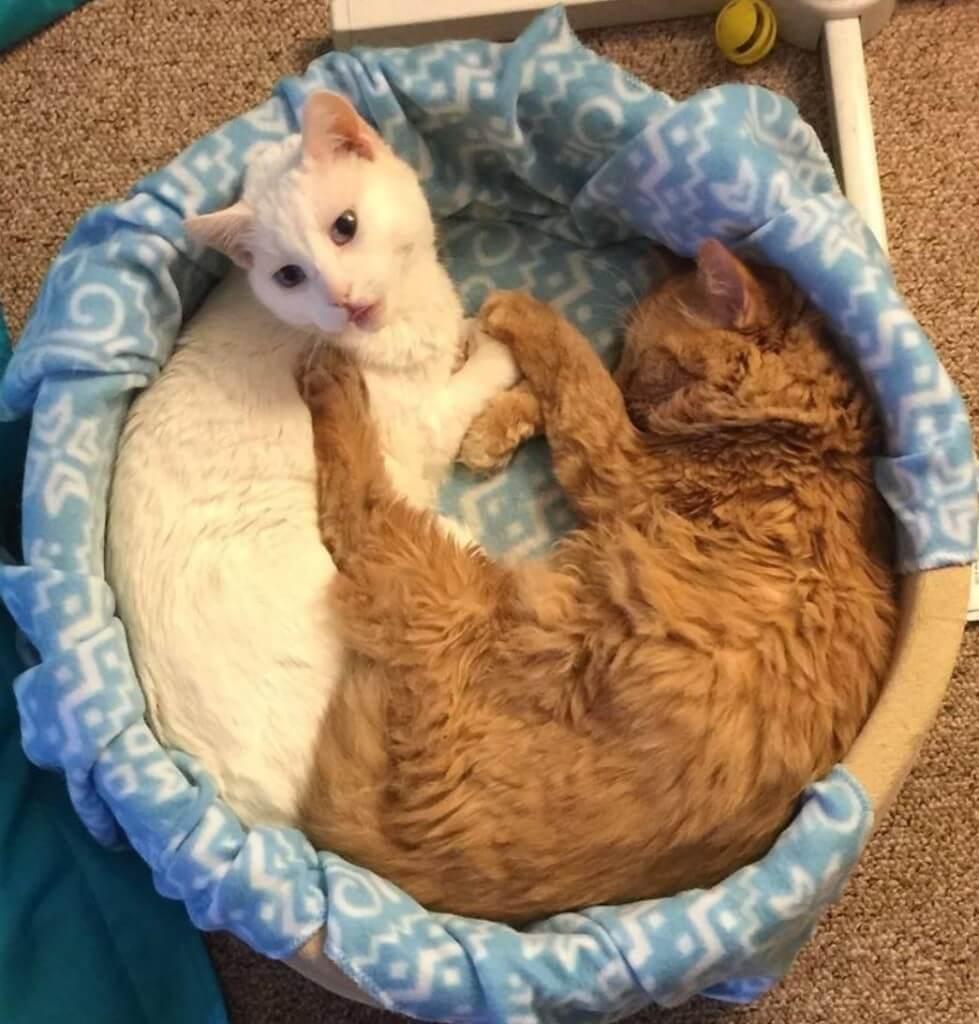 K&h-cat-beds3