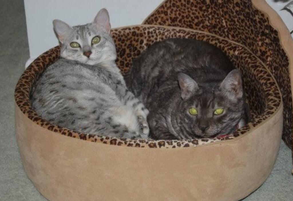 K&h-cat-beds5