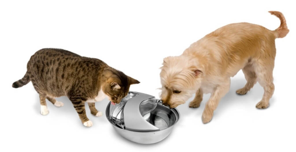 Pioneer-pet-water-fountain2