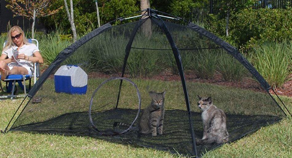 ABO Cat Enclosure - Full Review