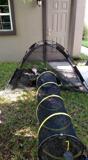 ABO-cat-enclosure-4