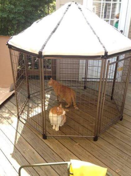 Advantek Cat Enclosure Full Review