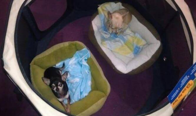 Precision-Pet-cat-enclosure-2