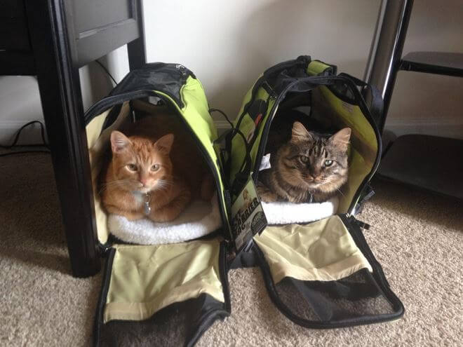 OxGord-Pet-Carriers-2