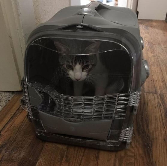 catit-cat-carrier-2