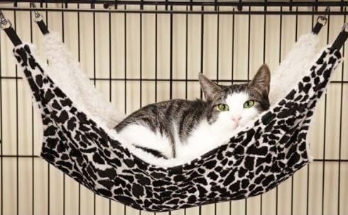 proselect polyester small pet cage hammock best cat hammocks  u0026 pods  u2013 full review  rh   catsupplies