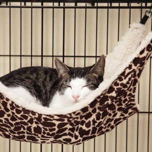 cat-hammock-2